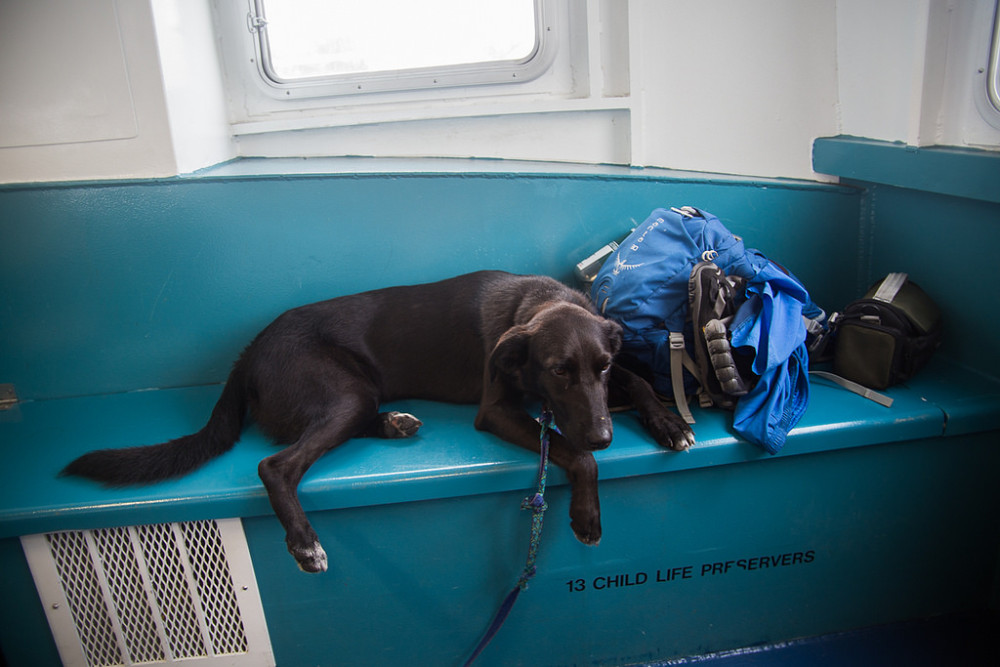 Porter on the ferry