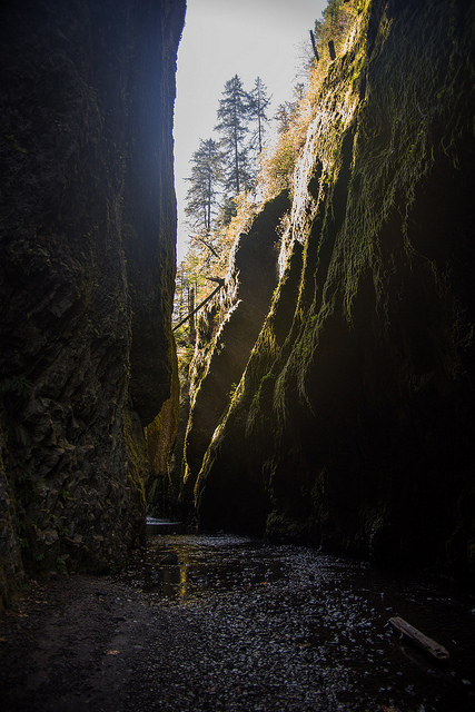 Oneonta gorge